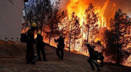 ΗΠΑ: Στους 79 οι νεκροί από τις πυρκαγιές στην Καλιφόρνια