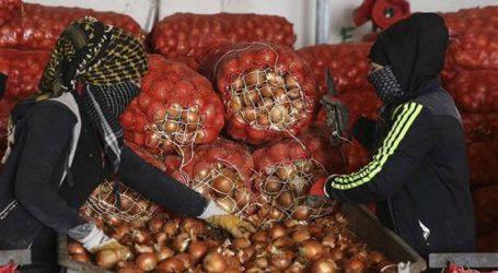 Ο Ερντογάν κήρυξε τον «πόλεμο» στους… «μαυραγορίτες» των κρεμμυδιών!