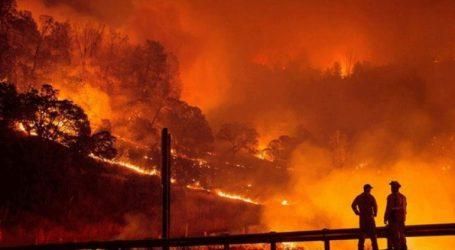 88 νεκροί και 196 αγνοούμενοι από την πυρκαγιά της Καλιφόρνια