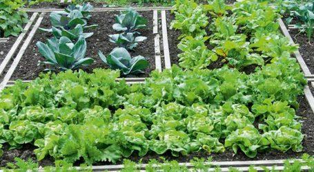 Παραλαβή νέων κηπαρίων στο Δημοτικό Λαχανόκηπο
