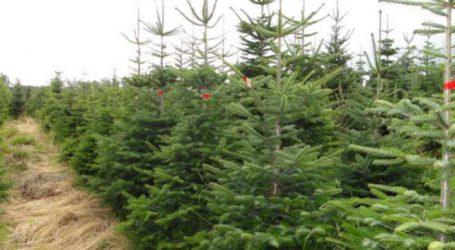 Οι τιμές για τα χριστουγεννιάτικα δέντρα