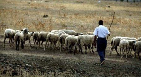 Επιστολή από την Ομοσπονδία Κτηνοτρόφων Θεσσαλίας προς τα κόμματα για την αιγοπροβατοτροφία στην Ελλάδα