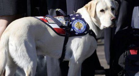 Ο πιστός σκύλος του Τζ. Μπους συνόδευσε το αφεντικό του στο τελευταίο του ταξίδι