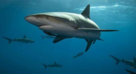Καρχαρίας επιτέθηκε και τραυμάτισε σοβαρά 36χρονο σέρφερ