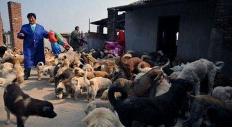 Το μεγαλύτερο καταφύγιο αδέσποτων ζώων