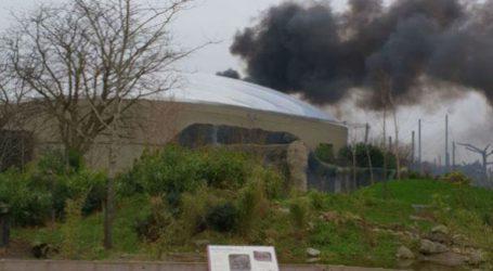 Ασφαλή είναι όλα τα ζώα ζωολογικού κήπου ο οποίος εκκενώθηκε εξαιτίας πυρκαγιάς