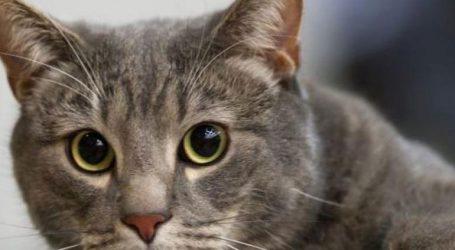 Ρώσοι επιστήμονες δημιουργούν εμβόλιο για την αλλεργία στις γάτες