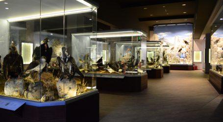 Έρευνα κοινού του Μουσείου σε συνεργασία με το Ιόνιο Πανεπιστήμιο