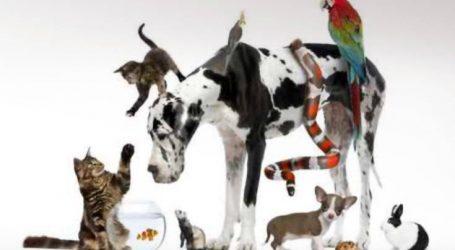 Βρείτε πολύ φθηνές και ποιοτικές τροφές για το κατοικίδιό σας στο online pet shop