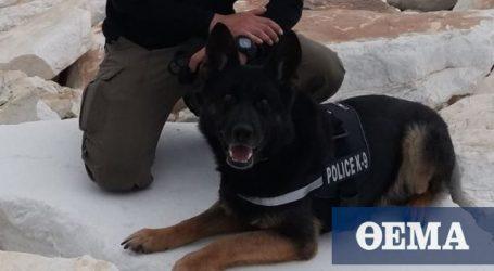 Το συγκινητικό αντίο της ΕΛΑΣ στον αστυνομικό σκύλο «Τζάκι»