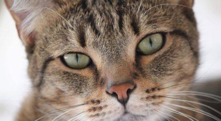 Ήταν ένας γάτος, γάτος πονηρός στα Δικαστήρια του Βόλου