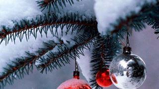 Θεσσαλονίκη: Κανένα χριστουγεννιάτικο δέντρο στις χωματερές