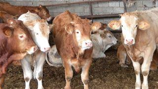 Το Οικονομικό Φόρουμ του Νταβός στοχοποιεί… το μοσχαρίσιο κρέας