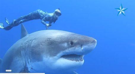 Δύτες κολύμπησαν πλάι σε έναν γιγαντιαίο μεγάλο λευκό καρχαρία