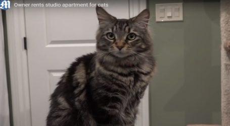 Νοίκιασε για τις δύο γάτες της διαμέρισμα των 1500 δολαρίων