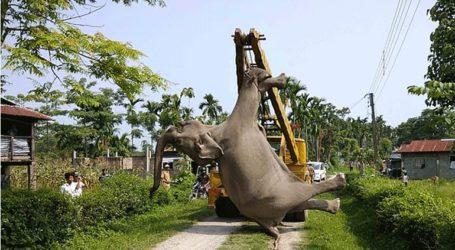 Δυο νεκροί ελέφαντες σε κατοικημένη περιοχή από ηλεκτροπληξία