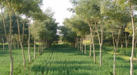 Ξεκίνησε η υποβολή αιτήσεων για το πρόγραμμα δάσωσης γεωργικών γαιών