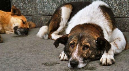 Περίεργες υποθέσεις, παράνομης εξαγωγής αδέσποτων ζώων καταγγέλλουν φιλόζωοι [βίντεο]