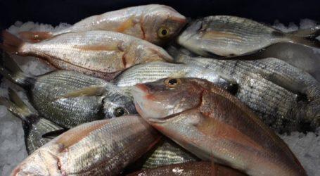 Δεσμεύτηκαν αλιεύματα σε επιχείρηση του Πειραιά