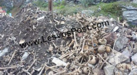 Αποτρόπαιο θέαμα σε νεκροταφείο του Πλωμαρίου