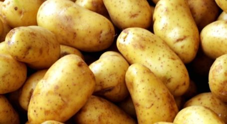 Κατασχέθηκαν και καταστράφηκαν 2,6 τόνοι πατάτας στον Πειραιά