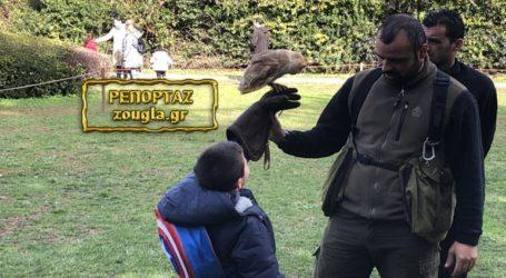Γνωρίστε τον άνθρωπο που τιθασεύει τα άγρια αρπακτικά στον αττικό ουρανό