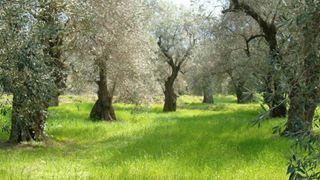 Στο ένα δισεκατομμύριο ευρώ φτάνουν οι ελληνικές εξαγωγές ελαιολάδου και επιτραπέζιας ελιάς