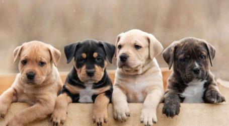 Ανησυχούν ιδιοκτήτες σκύλων στις ΗΠΑ μετά την ανάκληση τροφών