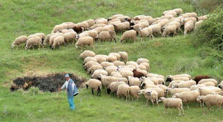 Η Κάλιαρι συμπαρίσταται στους κτηνοτρόφους κατά τις κινητοποιήσεις τους