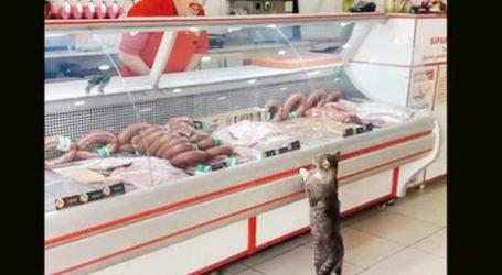 Χασάπης κατασκεύασε τάφο για την καλύτερη πελάτισσά του τη γάτα Γεσίμ