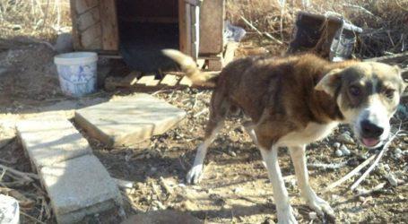 Καταδίκη κυνηγού για κακοποίηση 11 σκυλιών στην Αμμουδάρα