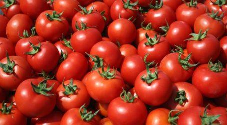 Δέσμευση 2,5 τόνων ντομάτας χωρίς σήμανση