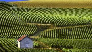 Αυξάνει την παρουσία του στις μεγάλες ευρωπαϊκές αγορές το ελληνικό κρασί