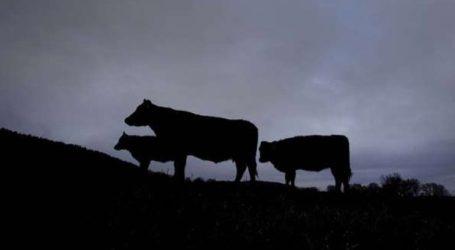 Κτηνοτρόφος θα αποζημιώσει την οικογένεια Γερμανίδας που σκοτώθηκε όταν της επιτέθηκε μια αγελάδα