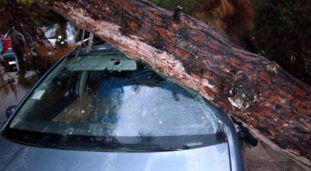 Νέα Σμύρνη: Δέντρο καταπλάκωσε οχήματα