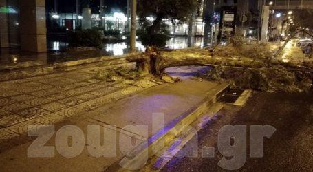 Πτώση δένδρου στο Μαρούσι