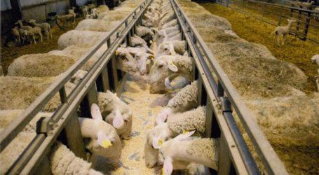 Περίπου 350 κτηνοτρόφοι στοχεύουν στη δημιουργία σύγχρονων τυροκομικών μονάδων