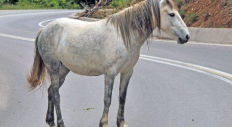 Άλογο κυκλοφορούσε αμέριμνο στο Βελεστίνο