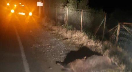 Αυτοκίνητο συγκρούστηκε με αγριογούρουνο έξω από τον Βόλο [εικόνες]