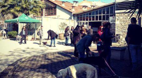 Υιοθετήθηκαν έξι αδέσποτοι σκύλοι σε μία μέρα στον Βόλο