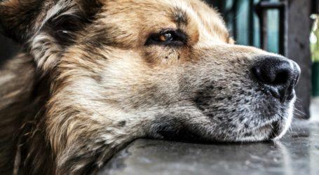 Άμεση αντίδραση του Δήμου Βόλου για το σκυλί που δάγκωσε μαθητή, ύστερα από το δημοσίευμα του TheNewspaper.gr