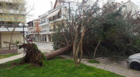 Έπεσαν δέντρα από τον αέρα στη Λάρισα
