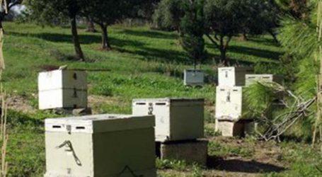 Ένας 24χρονος πίσω από την κλοπή κυψελών μελισσών στα Φάρσαλα