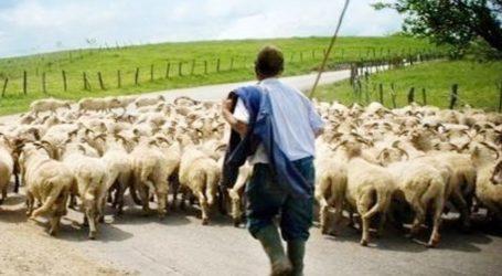 Ικανοποίηση κτηνοτρόφων δήμου Ρ. Φεραίου για οικονομικές ενισχύσεις