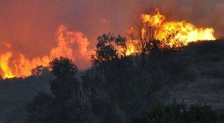 Φωτιά στην Καλλιπεύκη καίει δεκάδες στρέμματα δασικής έκτασης