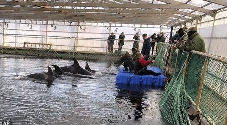 Οι ρωσικές αρχές έδωσαν εντολή για την απελευθέρωση των «φυλακισμένων» φαλαινών