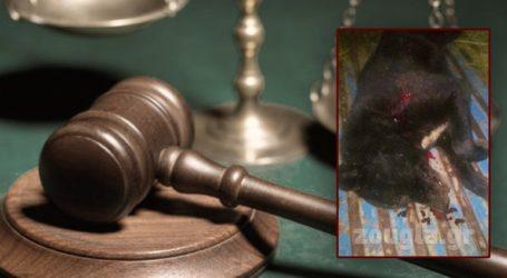 Εκδικάζεται την Τετάρτη στη Λιβαδειά η υπόθεση θανάτωσης δύο σκυλιών με καραμπίνα