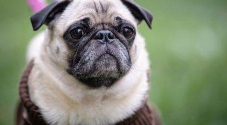 Σάλος από την απόφαση της δημοτικής αρχής γερμανικής πόλης να πουλήσει στο eBay το σκυλάκι οικογένειας που είχε χρέη