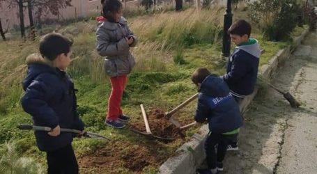 Βοηθήστε να βρεθούν δέντρα για τον οικισμό «Γλυκιά Ζωή»