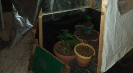 Καλλιεργούσε κάνναβη μέσα στο σπίτι του